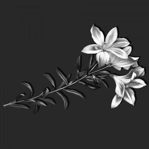 Цветы лилии ГР0065