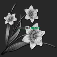 Цветы нарциссы ГР0068