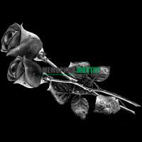Цветы розы ГР0009
