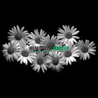 Цветы ромашки ГР0003