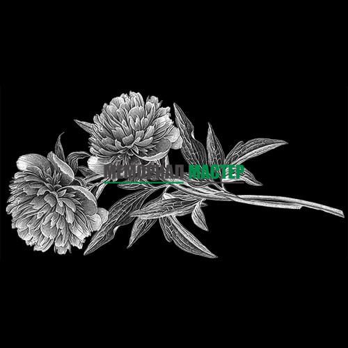 Цветы пионы ГР0008