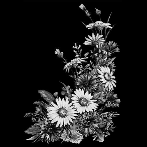 Полевые цветы ГР0008