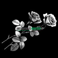 Цветы розы ГР0026