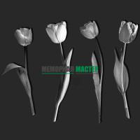 Цветы тюльпаны ГР0029